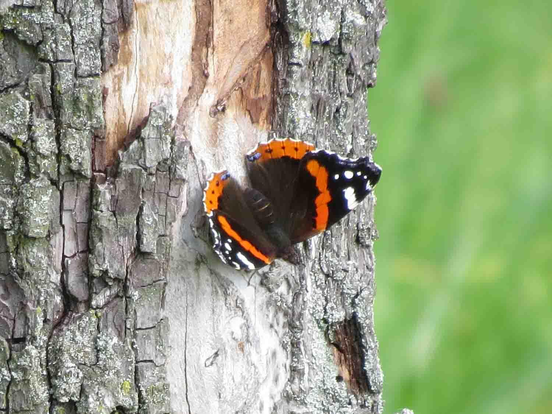 Insekten – Seite 4 – natur-erleben-online