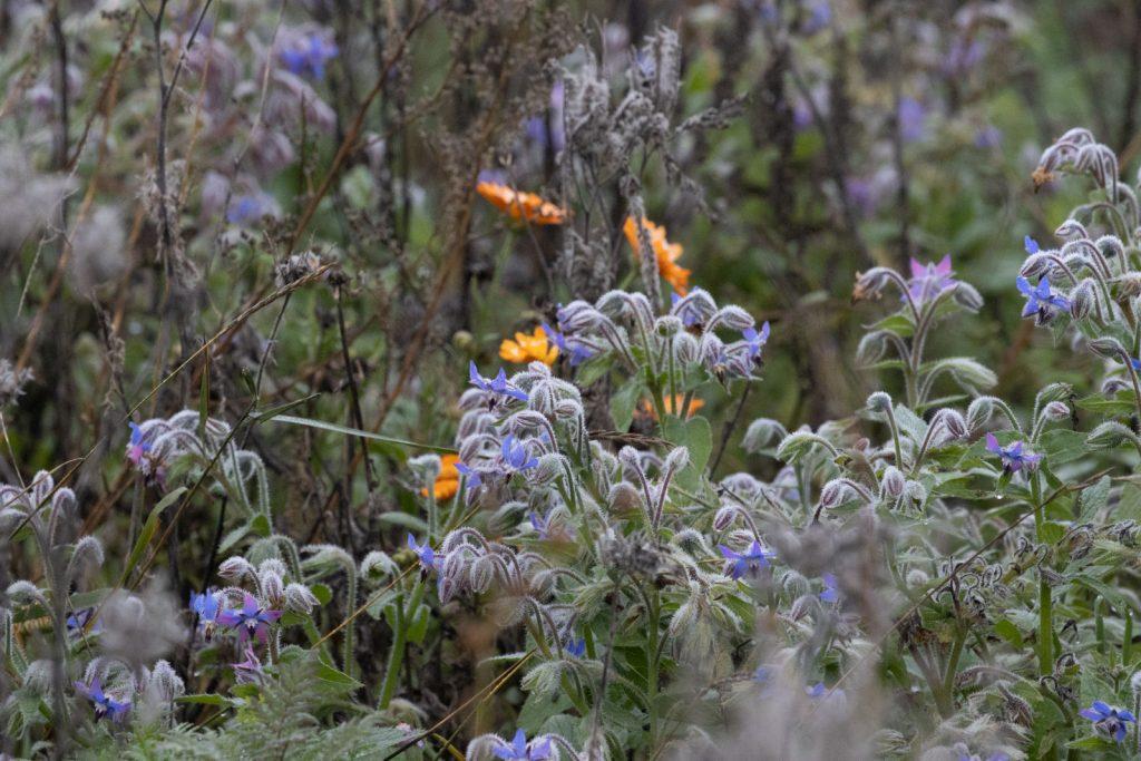 BlumenStreifen-6185