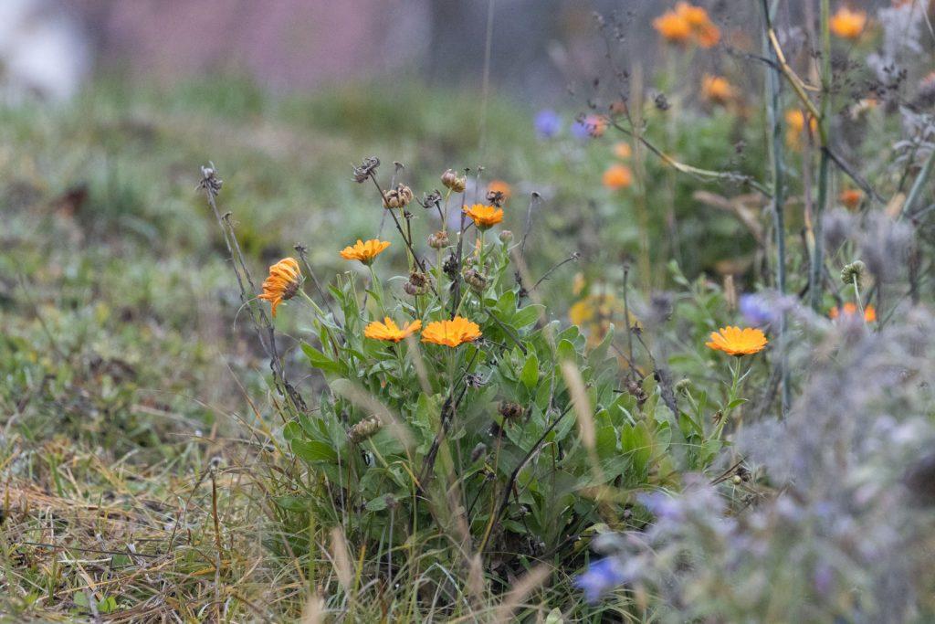 BlumenStreifen-6187