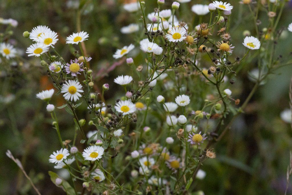BlumenStreifen-6188