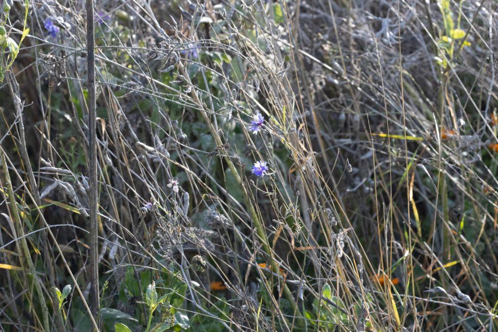 BlumenStreifen-6348