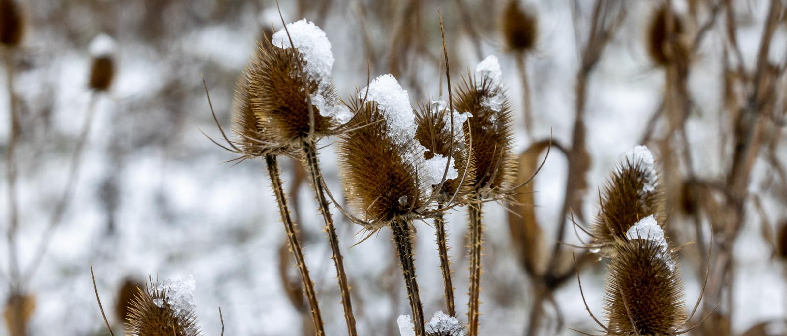 Winter20-8603