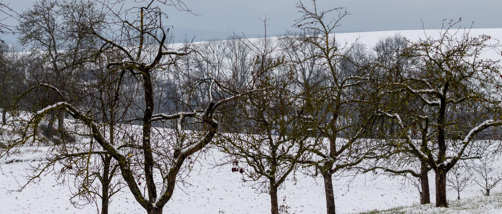 Winter20-8639